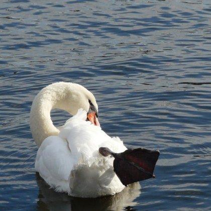 Wat müt dat müt - Körperpflege im Wasser