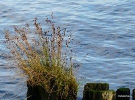 Gras wächst immer und überall